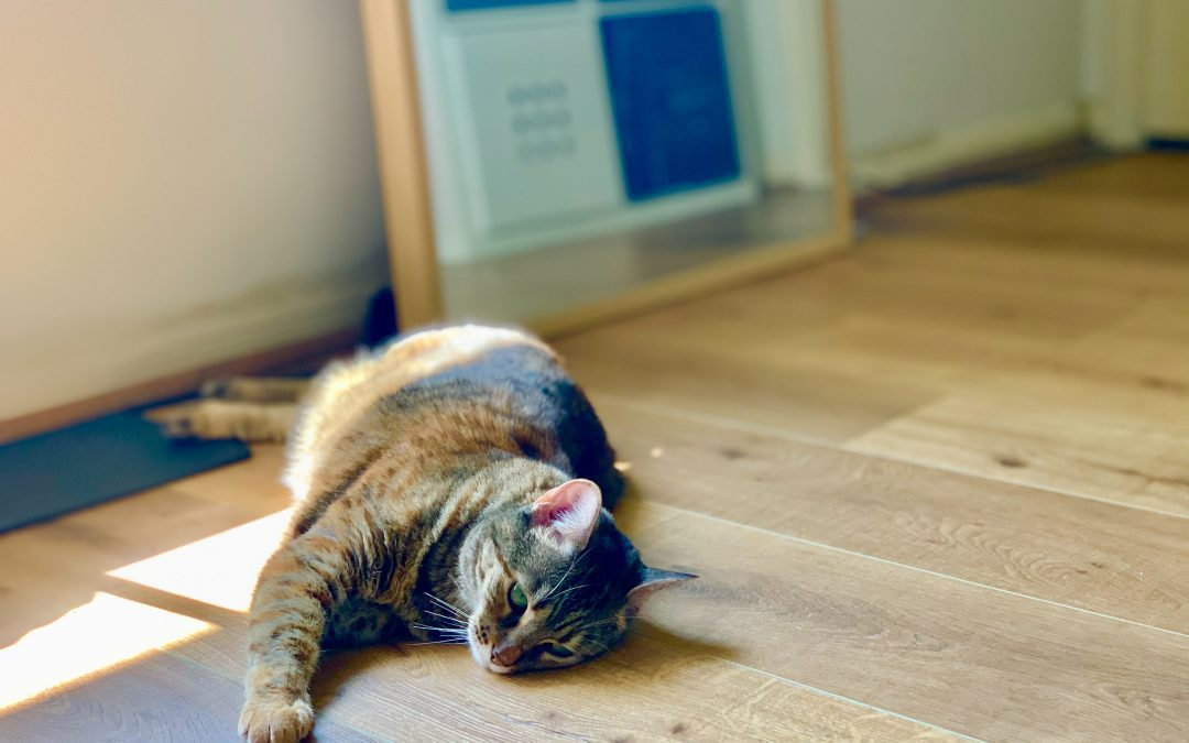 What are the best pet friendly flooring options?
